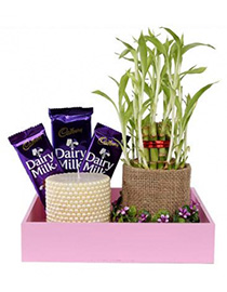 Plant Combo Gift
